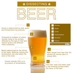 dissecting_beer_800.jpg